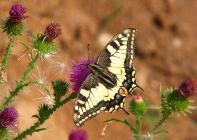 Motyl przyroda fot. Andrzej Sulej