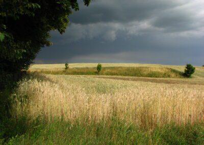 Zboże łąka fot. Andrzej Sulej