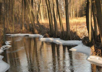 Zima fot. Andrzej Sulej