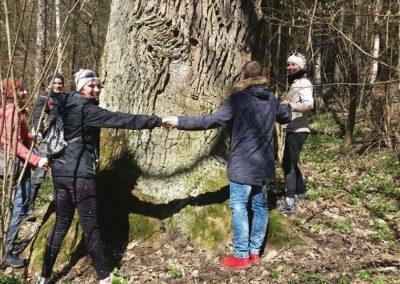dąb-drzewo